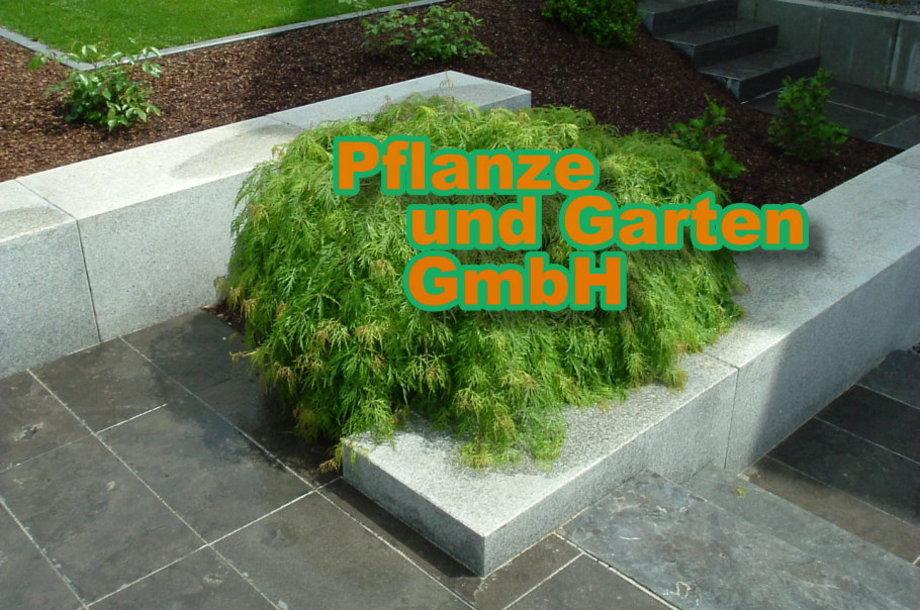 Gartenbau Und Landschaftgestaltung In Marktheidenfeld   Pflanze Und Garten  GmbH Marktheidenfeld